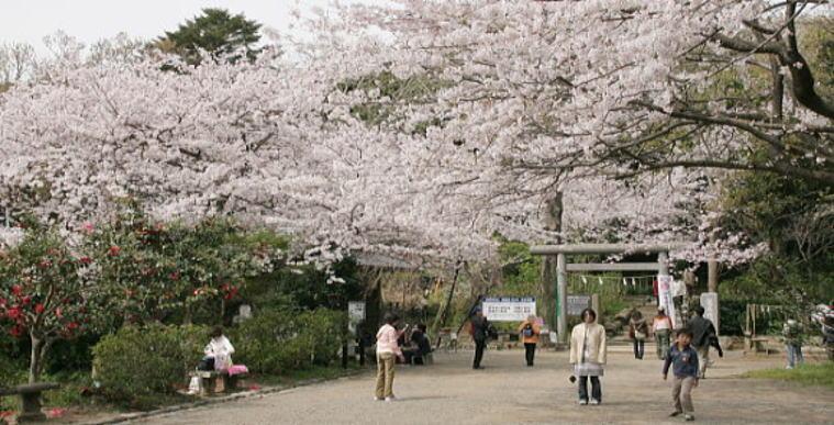 http://m-y-star.com/sight/kamakura/sakura/genjiyama/IMG_2684_1.JPG